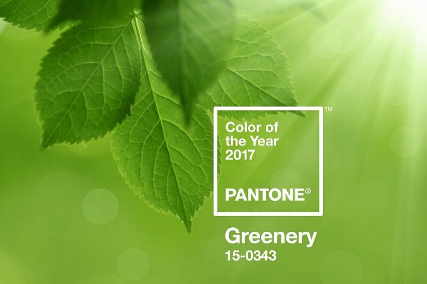 Pantone Colour of the Year Greenery, Pantone 15-0343